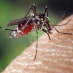 Helpt het slikken van vitamine B supplementen tegen muggenbeten?